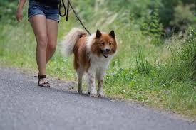 Foto zur Meldung: Leinenzwang für Hunde beachten