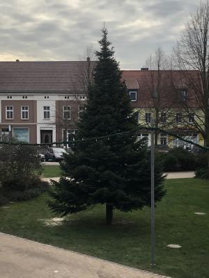 Vorschaubild zur Meldung: Aufstellung des Weihnachtsbaumes in Genthin