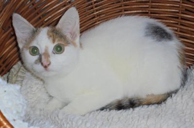 Vorschaubild zur Meldung: Wer vermisst seine junge Katze?