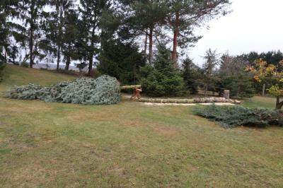 Foto zur Meldung: Wie kommt der Tannenbaum zum Adventsmarkt?