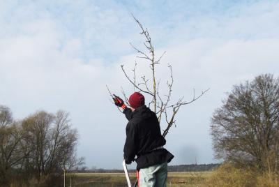Vorschaubild zur Meldung: Für interessierte Rüdersdorfer*innen: Obstbaumschnitt auf der 50Hertz-Entdeckerwiese