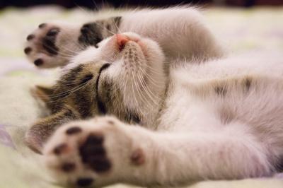 Vorschaubild zur Meldung: Katzenernährung 2.0 Frühjahrs Challenge
