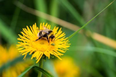 Foto zur Meldung: Keine Neonicotinoid-Insektizide oder Glyphosat mehr auf Gemeinde-Flächen