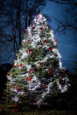 Vorschaubild zur Meldung: Dallminer Weihnachtszeit mit frischem Wind