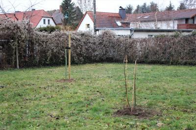 Vorschaubild zur Meldung: Zaußwitzer Fußballfans spenden neue Bäume