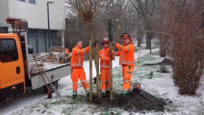Foto zur Meldung: Baumpflanzaktion in Holzwickede