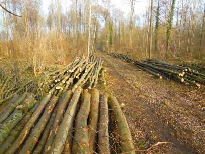 Vorschaubild zur Meldung: Aktuelle Informationen aus dem Staatlichen Forstrevier Philippsburg, Revierleiter Lothar Haring