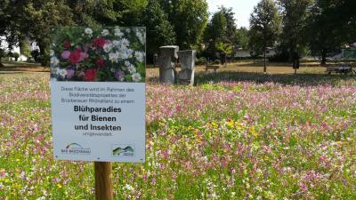 Die Blühfläche im Bad Brückenauer Georgi-Park war eines der ersten gemeinsamen Projekte der Brückenauer Rhönallianz mit der LWG.