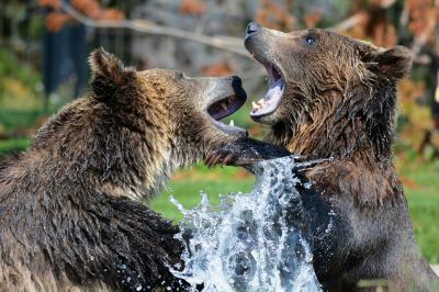 Foto zur Meldung: Bärenstarke Judo-Safari im Erlebnis-Zoo Hannover - Das Judo-Event des Jahres!