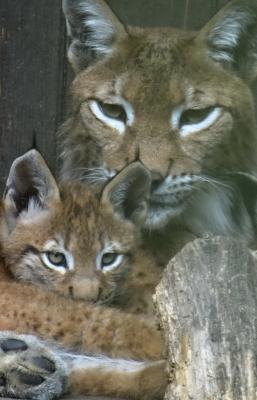 Foto zur Meldung: Mitglieder-und Wahlversammlung des Fördervereins Tierpark Perleberg