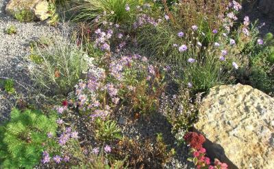 Vorschaubild zur Meldung: Blühende Gärten für Insekten – Naturgartenideen für jeden Hausgarten - Vortrag 29. März in Jossgrund-Burgjoß