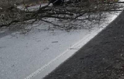 Vorschaubild zur Meldung: TH K - Baum auf Straße