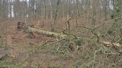 Vorschaubild zur Meldung: Schlosswald wegen Sturmschäden gesperrt