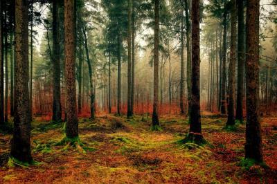 Foto zur Meldung: 21. März - Tag des Waldes