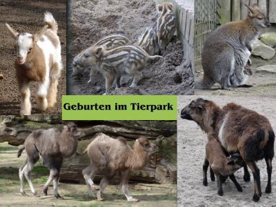 Foto zur Meldung: Frühling im Tierpark