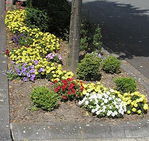 Foto zur Meldung: Patenschaften für Baumbeete und Grünflächen