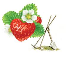 Vorschaubild zur Meldung: Traditioneller Pflanzen- und Blumenmarkt am Dienstag, den 07.05.2019 auf dem Marktplatz der Stadt Wriezen