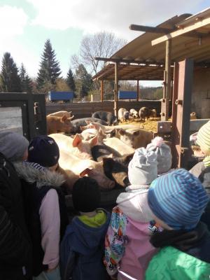 """Die Schweine waren fast so groß wie die Kinder aus der Kita """"Hummelburg"""". Foto: Privat"""