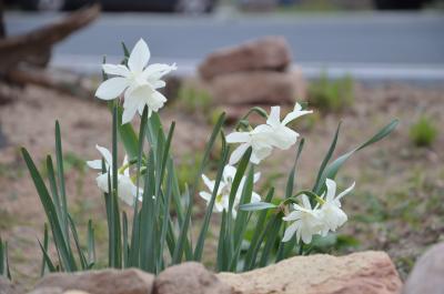Vorschaubild zur Meldung: Den Garten für Insekten zum Blühen bringen - Dorothee Dernbach referierte in Jossgrund