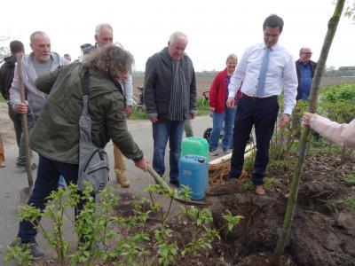Foto zur Meldung: Neue Bäume für Berzallee und Waldstraße
