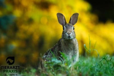 RHD II Kaninchenimpftag