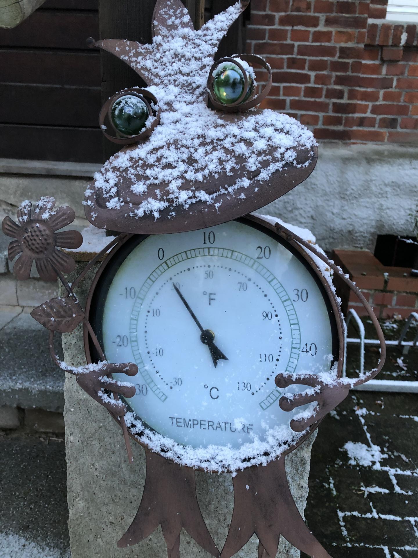 Frosch im Winterkleid