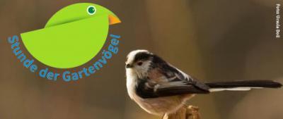 Foto zur Meldung: Stunde der Gartenvögel - mitmachen und gewinnen!