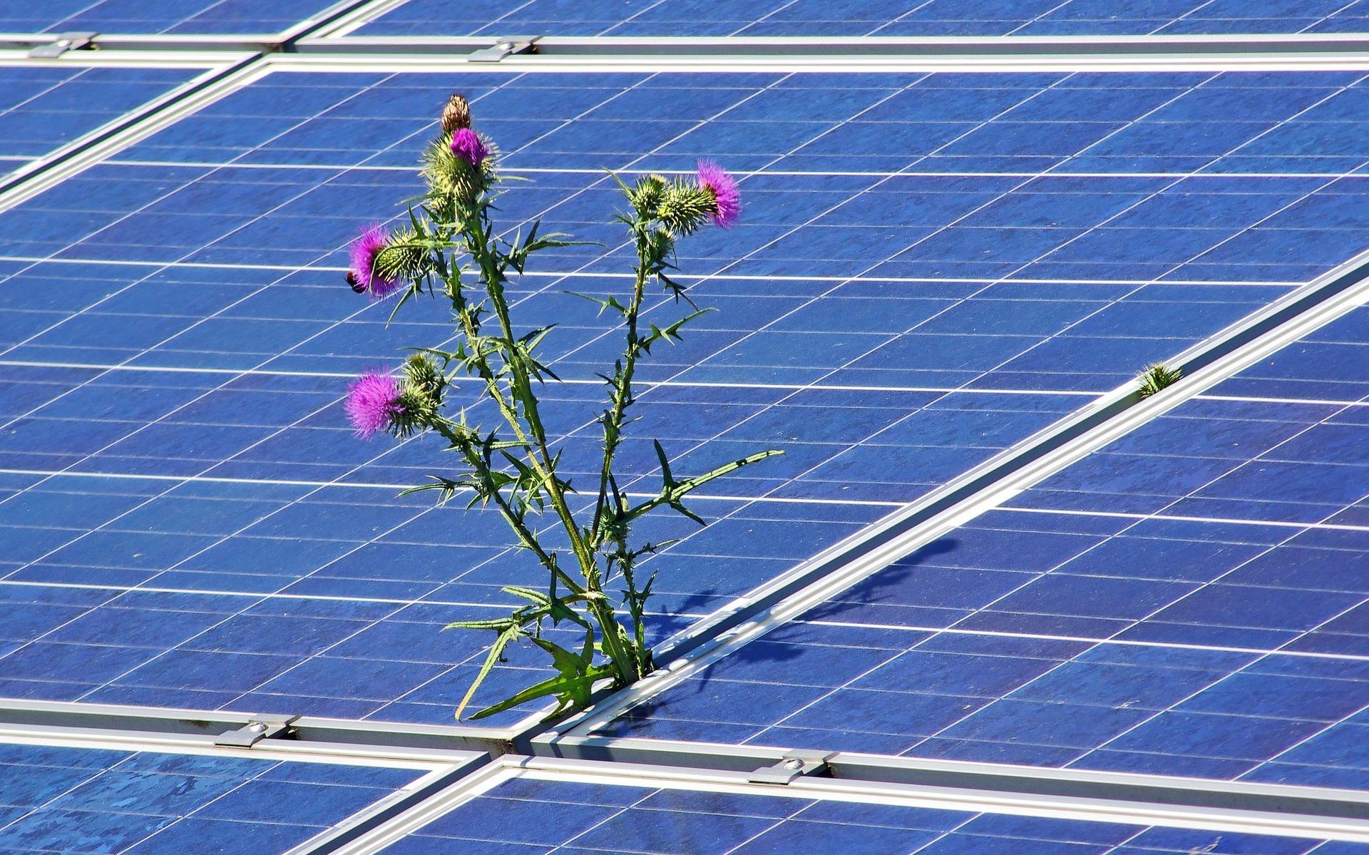 Bild der Meldung: Mit Bürgerenergie weiter in die Energiezukunft