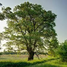 Foto zu Meldung: Tag des Baumes