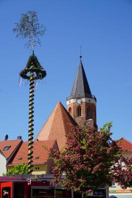 Der Maibaum in Calau wird auch dieses Jahr wieder aufgestellt. Foto: Stadt Calau / Jan Hornhauer