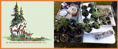 Foto zur Meldung: 17. Rehfelder Pflanzentauschmarkt wieder erfolgreich