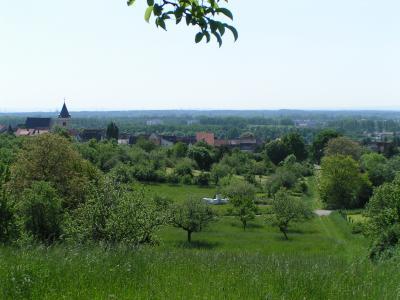 Die Freiwilligenagentur der Stadt Maintal bietet 2019 naturkundliche Wanderungen in der Natur von Maintal an. Das Foto zeigt den Blick auf Hochstadt