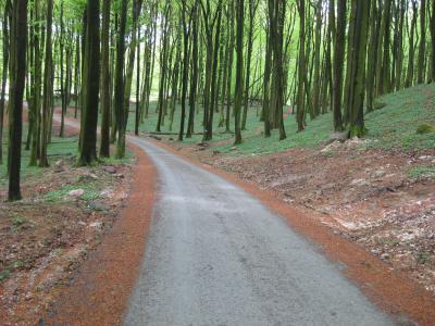 Der neue Radweg durch den Nationalpark Jasmund (Foto: Stadt Sassnitz)