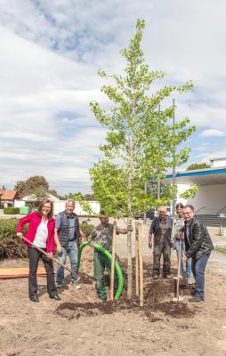 Vorschaubild zur Meldung: Bürgermeisterin und Ortsvorsteher pflanzten einen Amberbaum