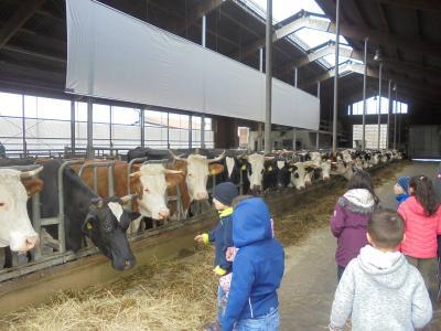 Vorschaubild zur Meldung: Ausflug zum Bauernhof