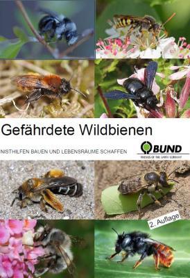 Foto zur Meldung: Gefährdete Wildbienen