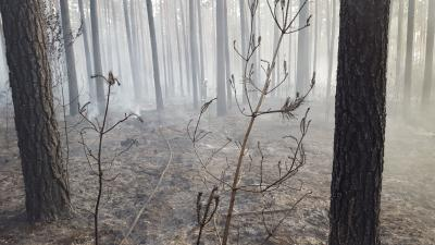 Vorschaubild zur Meldung: Waldbrand auf dem Truppenübungsplatz Lehnin