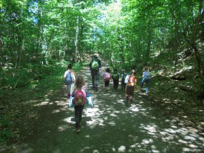 Vorschaubild zur Meldung: Waldwoche im Kindergarten Pfarracker