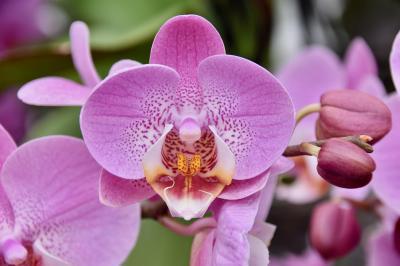 Wanderung: Orchideen und gelber Fingerhut im Sontraer Land