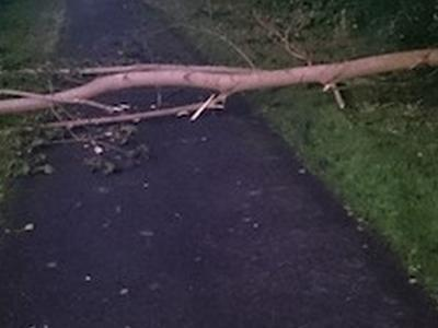 Vorschaubild zur Meldung: Baum auf Radweg
