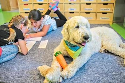 Bild der Meldung: Schulhund Pelle  - unser flauschiger Klassenkamerad