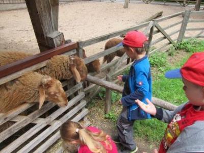 Vorschaubild zur Meldung: Ausflug in den Tierpark Bad Mergentheim
