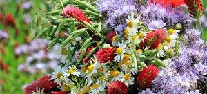 Vorschaubild zur Meldung: Praxistip: Der intelligente Blumenkasten - wertvoll für Insekten und für die Küche