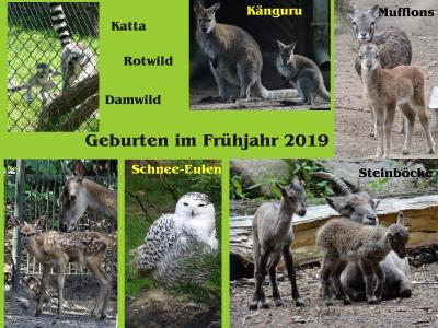 Foto zur Meldung: Nachwuchs im Perleberger Tierpark