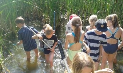Wir suchen Wassertiere