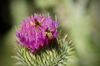 """Bild der Meldung: Nachholtermin: Naturkundliche Wanderung: Ab in die """"Grüne Mitte"""" Maintals"""