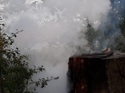 Vorschaubild zur Meldung: FEU K 00 - Baum brennt