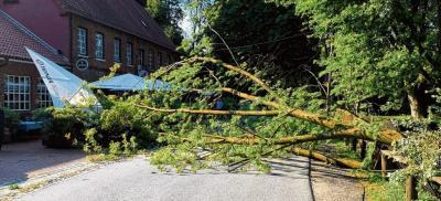 Vorschaubild zur Meldung: Baum fällt auf Terrasse