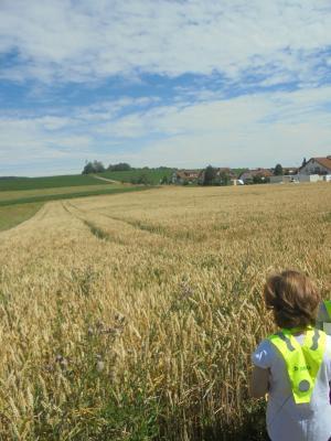 """Vorschaubild zur Meldung: Projekt """"Vom Korn zum Mehl zum Brot"""""""