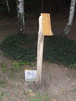 Foto zu Meldung: Erneut Vandalismus im Naturlehrpfad